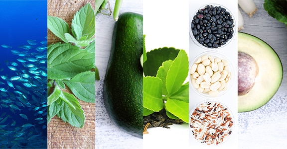 Foods to Lower Cortisol - The Wellnest by HUM Nutrition