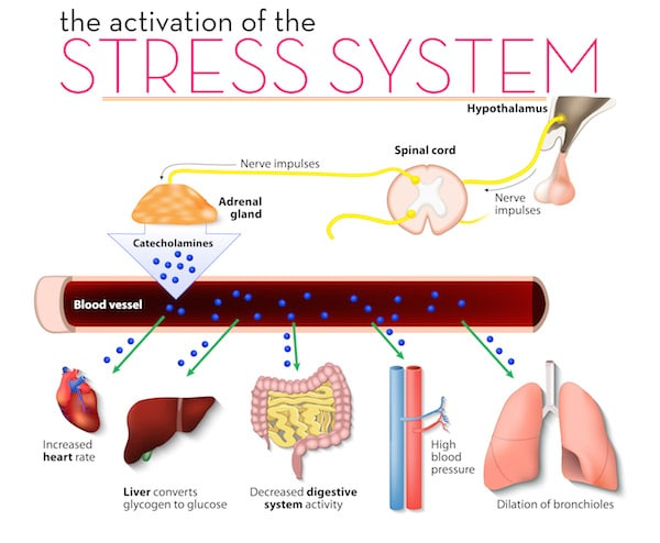 Infographic of an activated stress system