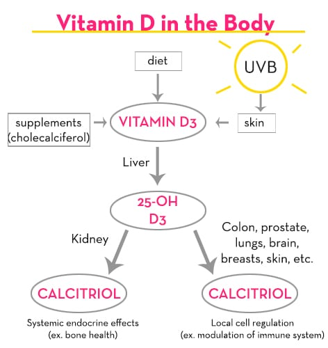 How the body processes vitamin D - The Wellnest by HUM Nutrition