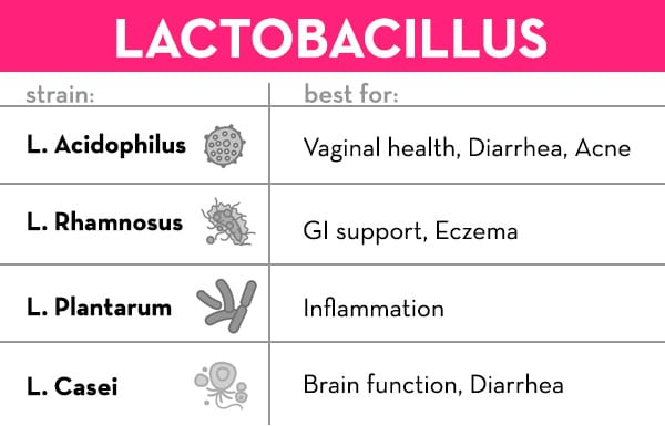 Best Probiotic For Women- Lactobacillus