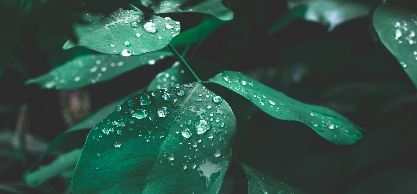 Green leaves with water droplets in dark lighting on Earth Day