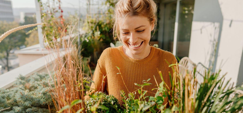 Calm woman gardening rhodiola rosea herb
