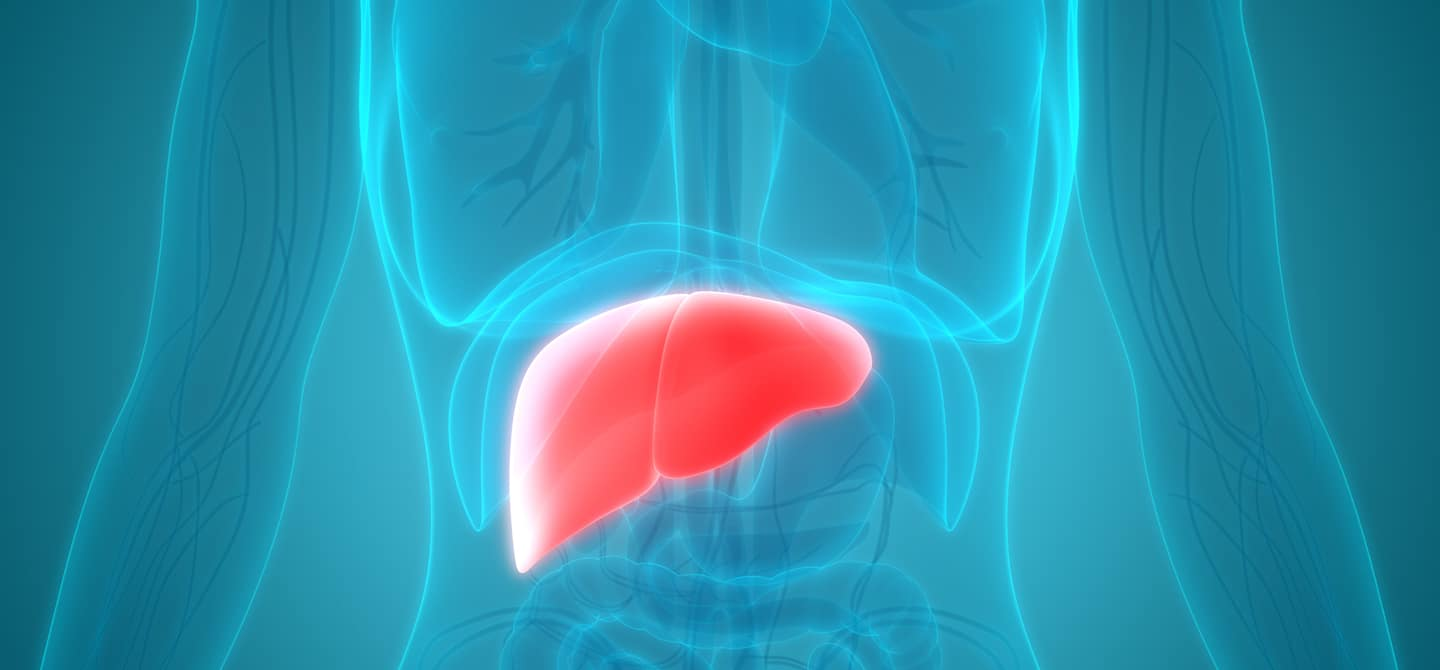 CGI of liver in human body