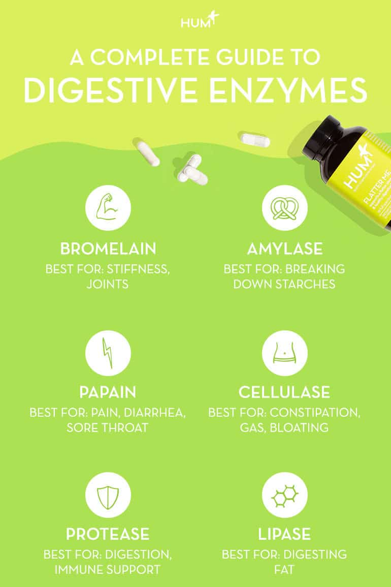 Graphic showing which types of digestive enzymes are beneficial for supporting different processes in the body.