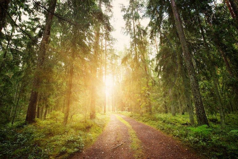 Walking Path - Silent Meditation Retreat - The Wellnest by HUM Nutrition.jpg