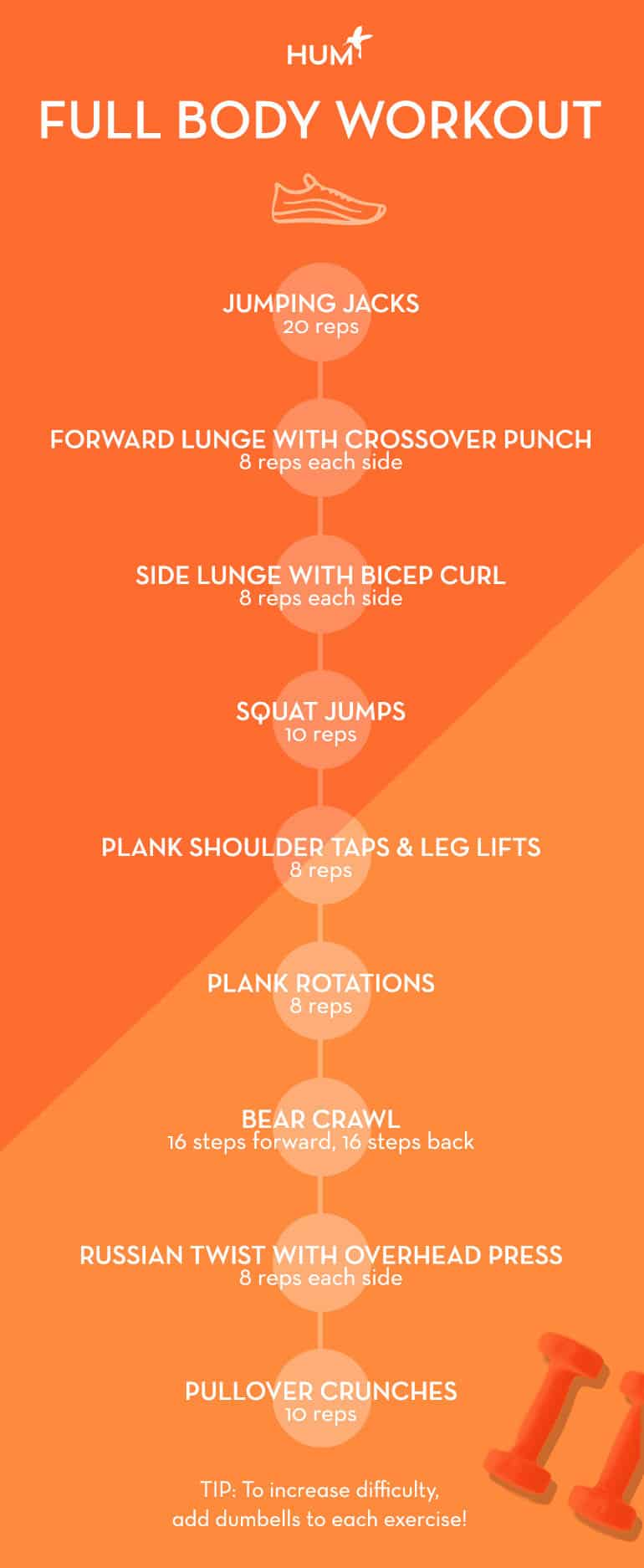 Full Body Workout Infographic