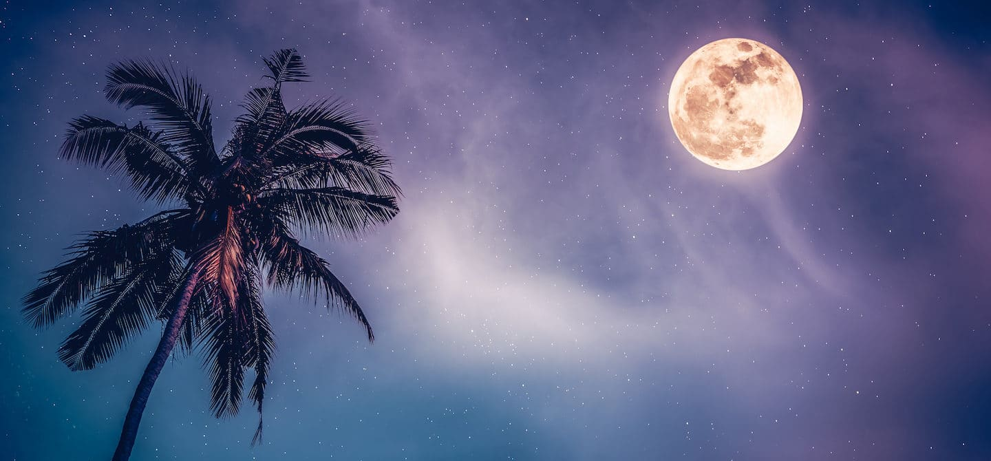 Full moon on a purple starry sky next to palm tree