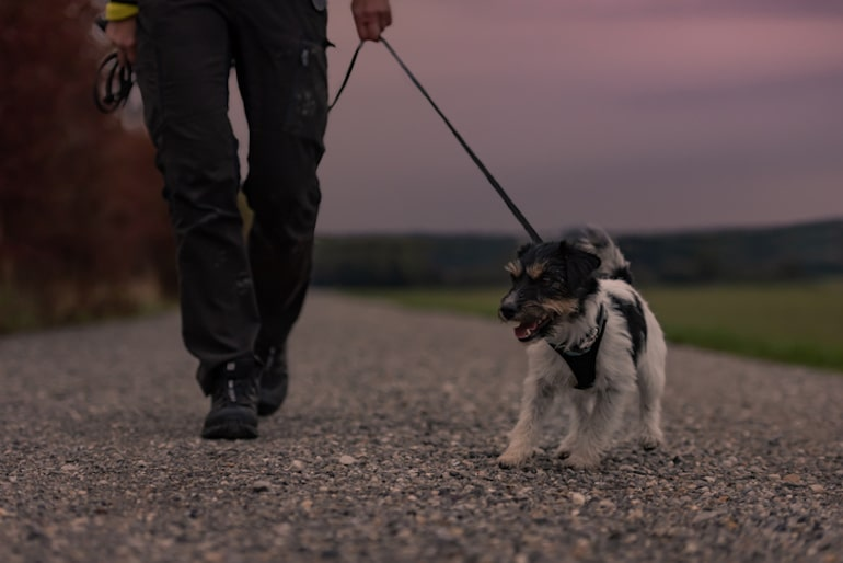 Man walking his dog after dinner, a key tip on how to prevent heartburn