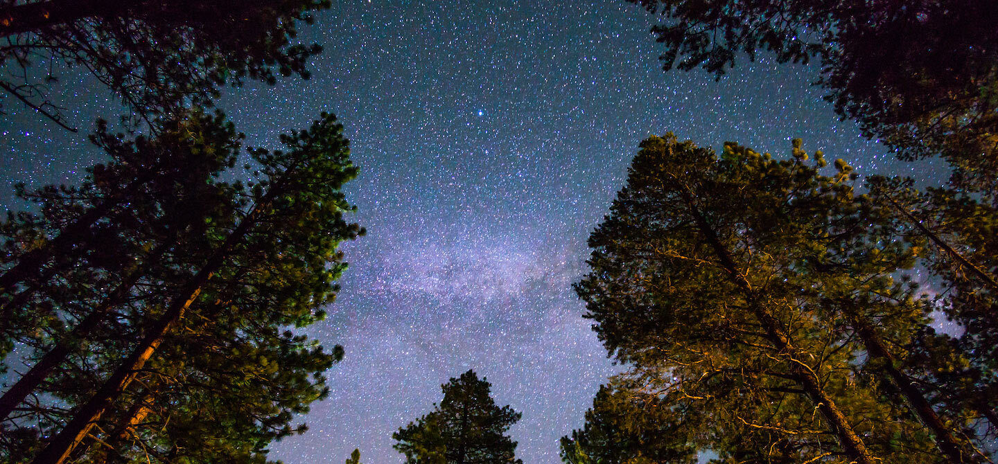 Starry night sky with purple hues in the forest for a wellness horoscope astrology concept
