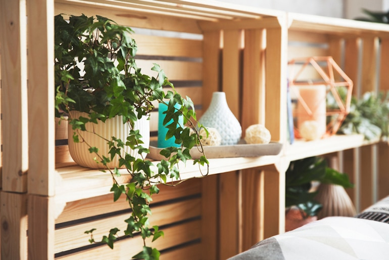 English ivy, one of the best house plants for air quality, on a shelf in a minimal home decor setting