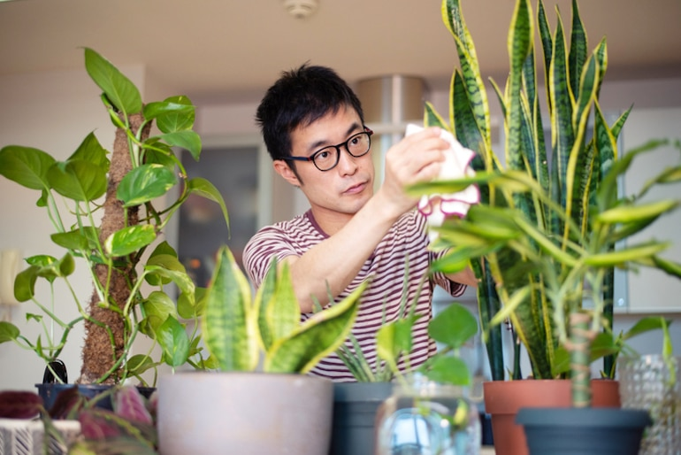 Man caring for his snake plant, one of the best house plants for air quality
