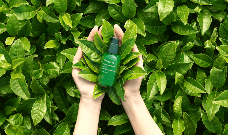 open hands holding innisfree intense hydrating serum in a field of green tea leaves