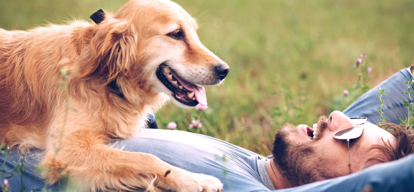 Man laying on grass with a golden retriever on top of him to illustrate health benefits of owning a pet