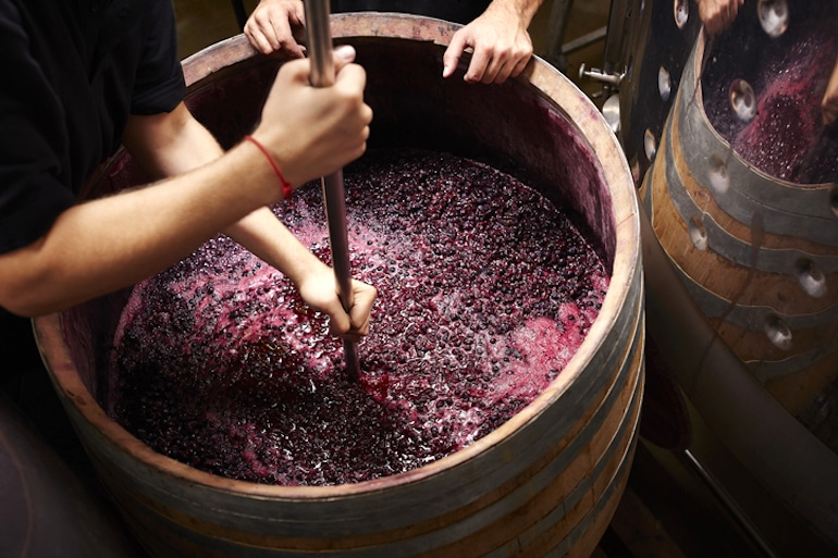 Winemakers crushing and fermenting grapes in a barrel to make natural wine