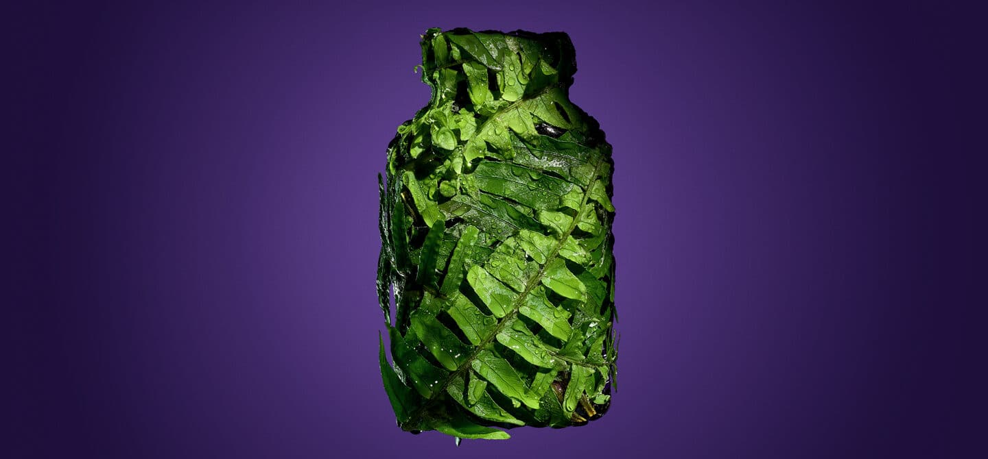Polypodium leucotomos fern covering a supplement bottle on a purple background
