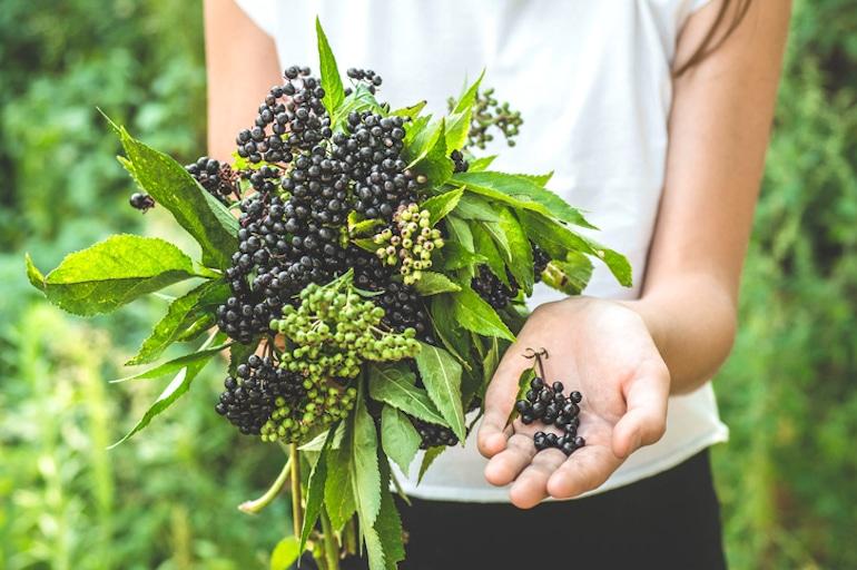 Girl holding elderberry in hand